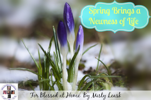 spring-brings-newness-life