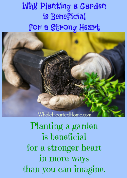 Planting a Garden is Beneficial for a Strong Heart {WholeHearted Home}