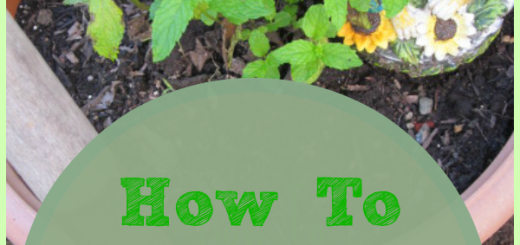 How To Care for Mint: 5 Tips {WholeHearted Home} - Herbs are fun to grow, so prepare a little herb patch and plant mint.